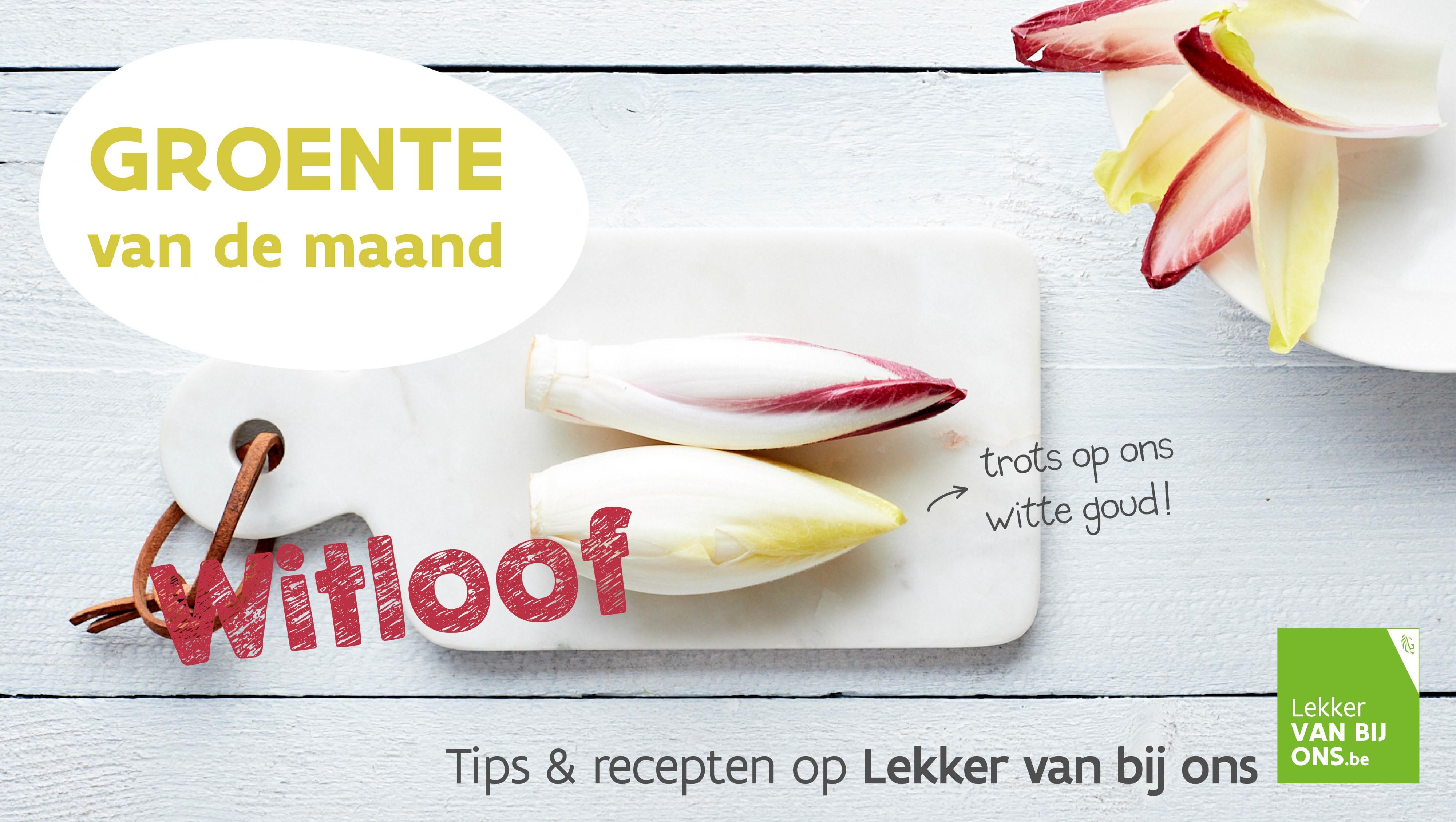 Flyer VLAM Witloof