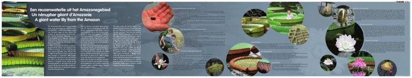 Het vroegere paneel over de waterlelie in de Plantentuin Meise, met heel veel tekst en afbeeldingen.