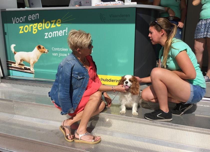 Een collega van Dierenwelzijn controleert een hond. Ze checkt of hij gezond is en of de gegevens van zijn chip kloppen.