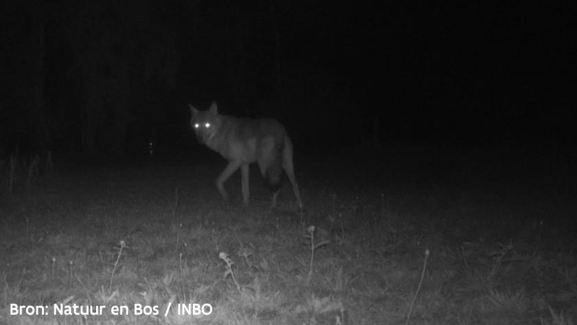 Wolf August op camerabeeld