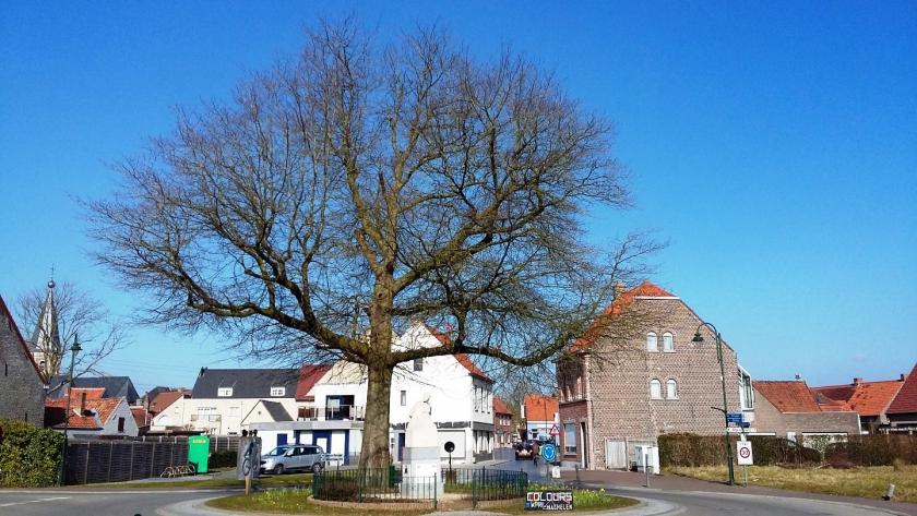 Vredesboom en oorlogsmonument in Machelen-aan-de-Leie (Foto: agentschap Onroerend Erfgoed)