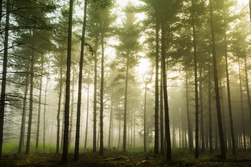 Sfeerbeeld van een bos
