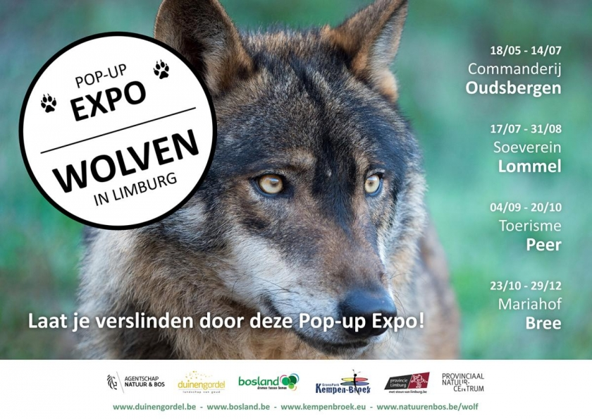 pop-up expo 'Wolven in Limburg'