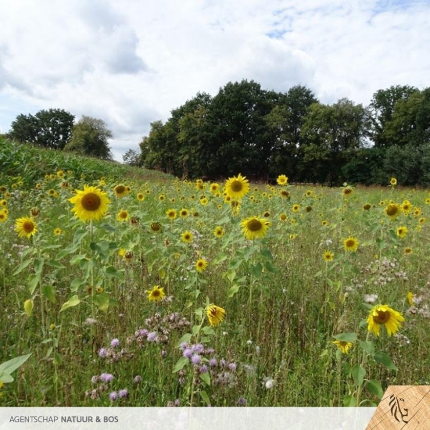 Fauna-akker met zonnebloemen